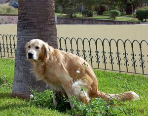 multa perro caca malaga via adn